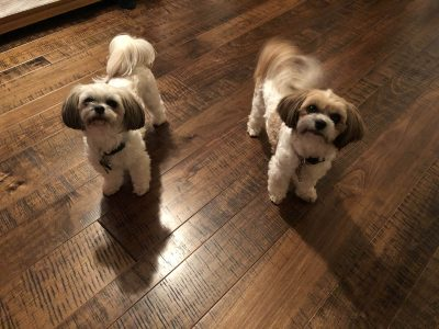 Dogs on hardwood flooring