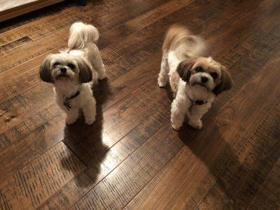 Dogs on hardwood flooring